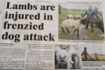 https://www.inverness-courier.co.uk/News/Lambs-are-injured-in-Inverness-dog-attack-25092018.htm